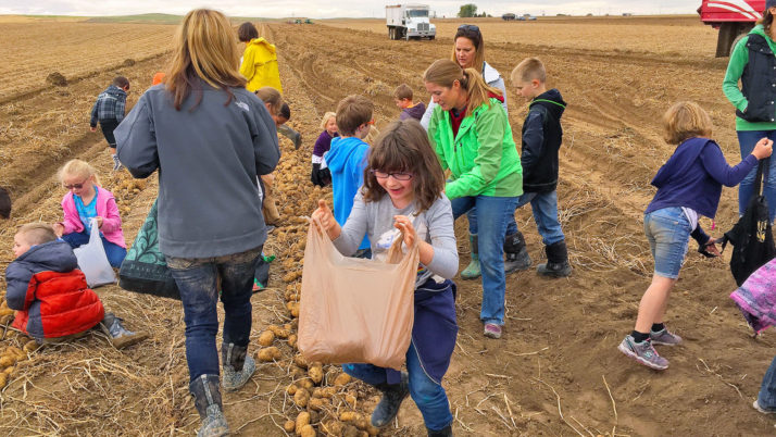 Charter school students glean potatoes for Idaho food bank